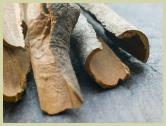 picture of Saigon cinnamon