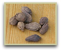 picture of black cardamom seeds