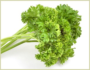 picture of curly leaf parsley
