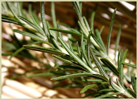 sprig of rosemary picture