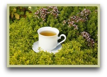 picture of oregano tea