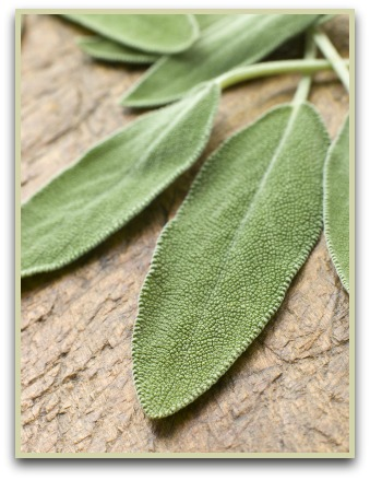 picture of sage herb