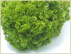 picture of curled parsley