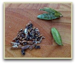 picture of green cardamom seeds