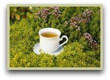 picture of oregano tea