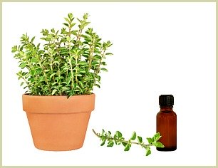 picture of oregano oil